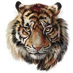 استیکر دیواری صالسو آرت طرح Beautiful tiger hk