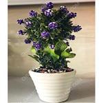گلدان بن سای مصنوعی تمشک کوچک