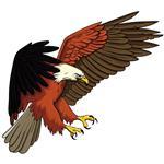 استیکر دیواری صالسو آرت طرح wild eagle mjr