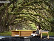 پوستر دیواری طرح جنگل DA-2111