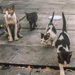 غذای خشک گربه نوتری مدل حمایتی برای گربه های بی سرپرست وزن 1 کیلوگرم