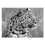 تابلو شاسی ونسونی طرح Tiger Hesitation  سایز 50x70 سانتی متر