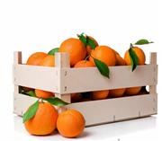 پرتقال تامسون ۵ کیلویی