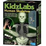 4M Glow Human Skeleton Educational Game