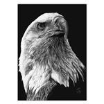 تابلو شاسی ونسونی طرح Scratchboard Art Eagle سایز 50 × 70