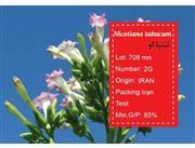 بذر تنباکو -nicotinia tabacum