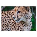 تابلو شاسی ونسونی طرح Baby Tiger سایز 50×  70 سانتی متر