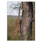 تابلو شاسی ونسونی طرح Jaguar On Tree سایز 50x70 سانتی متر