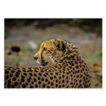 تابلو شاسی ونسونی طرح Tiger Cat Flashback سایز 50x70 سانتی متر
