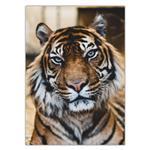 تابلو شاسی ونسونی طرح Tiger Notable Look سایز 50x70 سانتی متر
