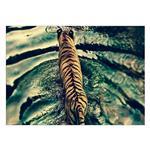 تابلو شاسی ونسونی طرح Tiger Peacful Swim سایز 50x70 سانتی متر