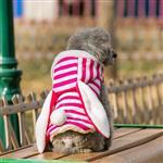 لباس سگ پالتوی گرم کلاه دار گوش خرگوشی راه راه