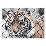 تابلو شاسی ونسونی طرح Tiger In Cage سایز 30x40 سانتی متر