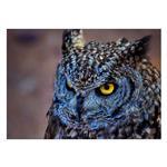تابلو شاسی ونسونی طرح Blue Eagle Owl سایز 50x70 سانتی متر
