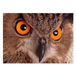 تابلو شاسی ونسونی طرح Eagle Owl Eye سایز 50x70 سانتی متر