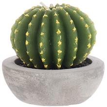 Harmony Cactus N10238 Candle