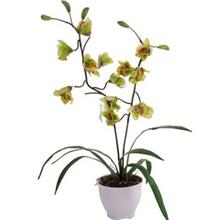Harmony Orchid MD2007 Flower Pot