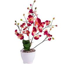 Harmony Orchid MD5999 Flower Pot