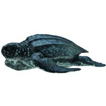 Collecta Leatherback Sea Turtle 88680 Size 1 Toys Doll