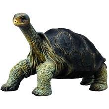 Collecta  Pinta Island Tortoise 88619 Size 1 Toys Doll