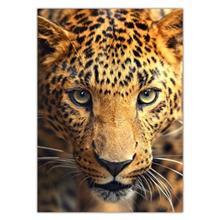 تابلوی ونسونی طرح Leopard Focus سایز 50x70